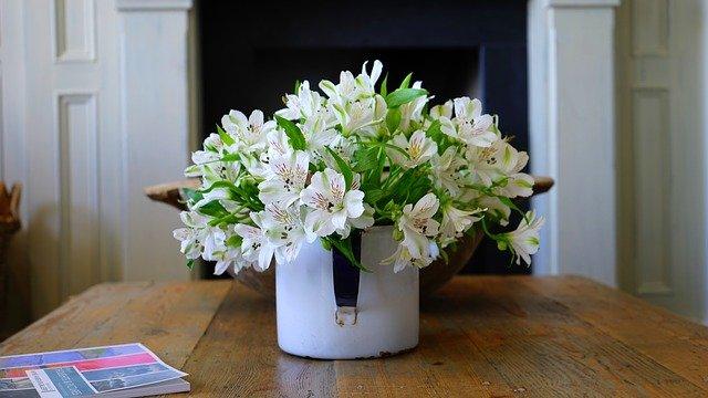 Zachráňte svoje zvädnuté izbové rastliny