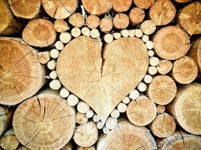 Drevo je základnou zložkou materiálneho sveta okolo nás