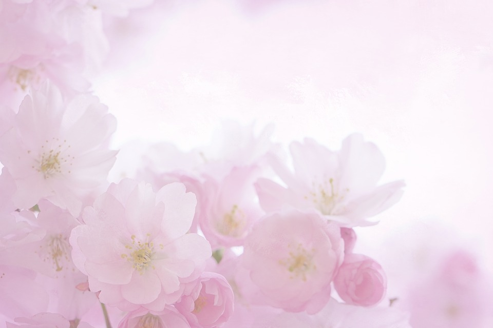 ružové kvety, motív